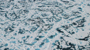 Dark areas of Arctic sea ice show where the thinning ice provides conditions for algae and phytoplankton. Credit NASA