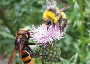 The new study looks at how bees and other insect pollinators should be monitored in the UK