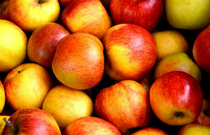 Research is seeking to show which apple varieties will grow best in future UK climates