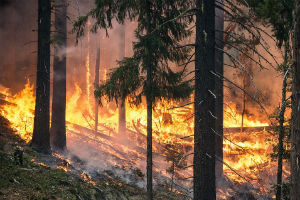 The University of Reading will help lead research by the Leverhulme Centre for Wildfires, Environment and Society