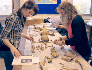 Part 2 students in the osteology lab