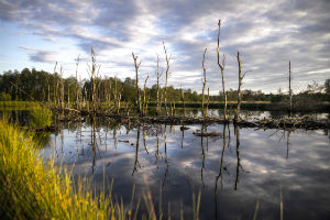 Wetlands and permafrost greenhouse gas emissions mean it may be more difficult to hit Paris Agreement global warming targets