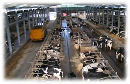 Efficiency of Protein Utilisation in Dairy Cows